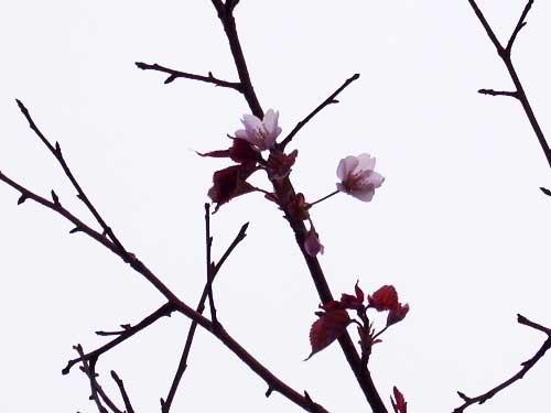120613rusa_blog.jpg