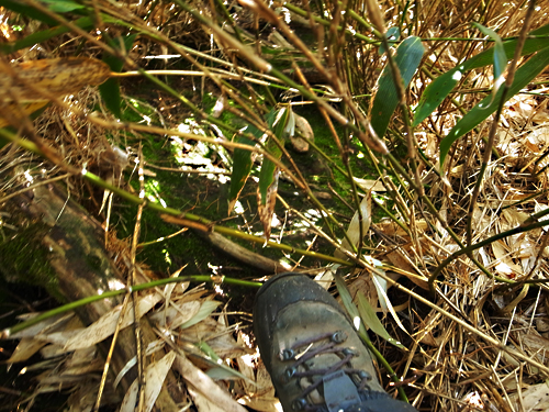 200509blog_fh.jpg